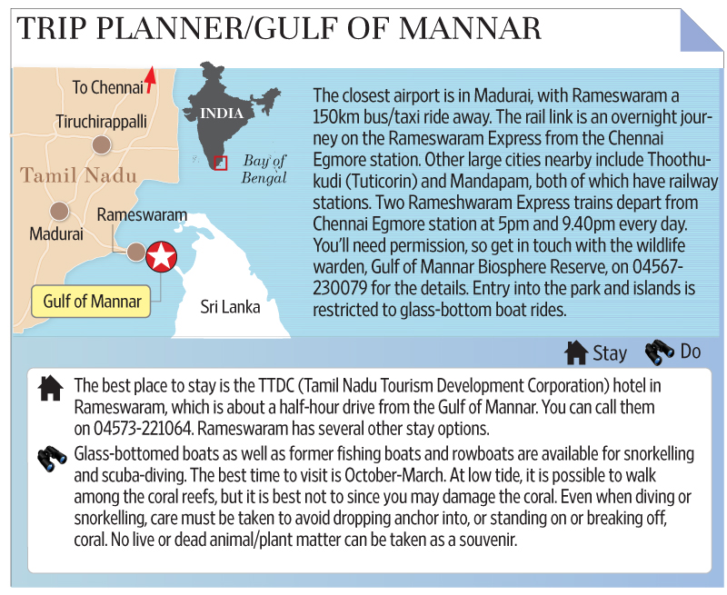 Gulf of Mannar | The real pearl of the South - Livemint