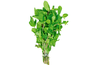 how to grow mint plant from stem