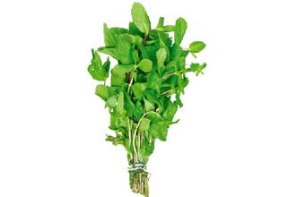 Image result for mint stem