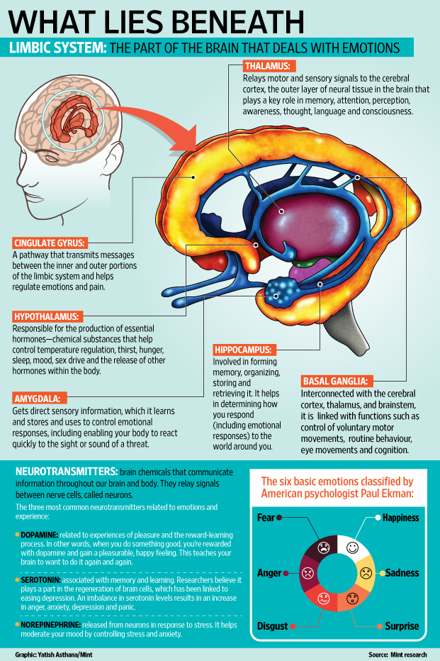The science of emotions - Livemint Limbic System Emotion