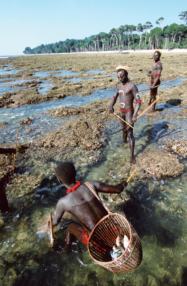 At low tide at the end of each day, the Jarawa go in small groups to catch fish. The women use fishing nets and the men use bows and arrows.