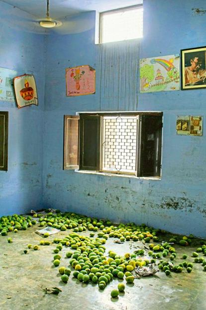 Mangoes left for ripening in a classroom.