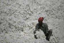 An impetus to ready-made garments will see the benefits trickle down to cotton yarn, too, helping spinning mills in the process. Photo: Hindustan Times