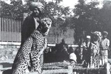 African cheetahs on charpoys (Bhavnagar, 1940). Photo courtesy: Aleph Book Company