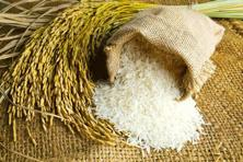 Rice can be a source of arsenic in the food chain