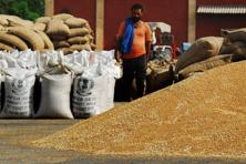 Production is set to drop as much as 17% to 80 million tonnes from a record 95.9 million tonnes a year earlier, said Pravin Dongre, chairman of the India pulses and grains association. Photo: Priyanka Parashar/Mint
