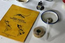 A book about Aedes aegypti, the mosquito breed which carries the Zika virus, is seen next to larvae in a laboratory in Guatemala. Photo: Reuters