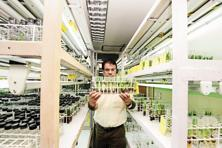 The in-vitro lab at NBPGR, New Delhi, the world's third largest plant gene bank. Photo: Ramesh Pathania/Mint