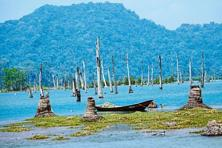 Stumps of trees remain on what used to be cultivable land in Great Nicobar. Photographs by Shamik Bag