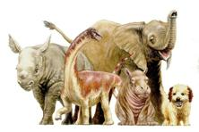 An artist's illustration showing the size comparisons of a newborn dinosaur called Rapetosaurus (2nd from L) that lived on the island of Madagascar to some large-bodied mammalian newborns such as a baby black rhino, African elephant, hippo and dog. Photo: Reuters/D.Vital