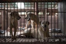 Import of dogs for research and development organisations under valid recommendations, defence and police forces for internal security is allowed. Photo: AFP