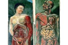 Two plates from French physician Jacques Gautier d'Agoty's 1746 book on anatomy. Photo: Wellcome Library/Wikimedia Commons