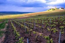 Rain, floods, and hailstorms have decimated vineyards since 2010, especially in the Côte de Beaune (the southern part of the famous limestone strip that's home to the most famous vineyards). Photo: Michel Spingler/AP