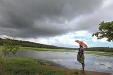 If the June-to-September south-west monsoon meets the forecast of above-normal rains—till Friday rains were normal across the country—India's pulse crop could rise to a record. Photo: Hindustan Times