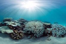 A panoramic image of coral bleaching in the Maldives captured by the XL Catlin Seaview Survey in May 2016. Photos: Courtesy XL Catlin Seaview Survey