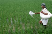 Fertilizer industry executives and tax experts said the draft Model GST Law, on which comments have been sought, makes it clear that subsidy payments are not spared from the new indirect tax regime.  Photo: HT
