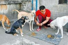 The dogs should be vaccinated after particular intervals as per the direction of veterinarians. Photo: Rishikesh Choudhary/Hindustan Times.