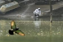 RRT member collecting water from lake as a sample to test for bird flu virus at Deer Park in New Delhi on Sunday. Photo: PTI