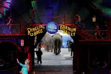 In May of last year, the Ringling Bros. and Barnum & Bailey circus retired its elephant act, years after a suit by activists. Photo: Reuters