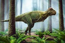 The tiny forearms of the T-rex could raise loads as heavy as 200kg, and were four times as powerful as those of an adult man.