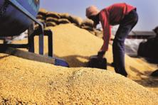 The import tax on wheat was 25% till last September, after which it was slashed to 10% till December. Photo: Mint