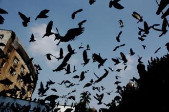Pigeons above the GPO kabutarkhana. Photo: Gopal MS/Mint
