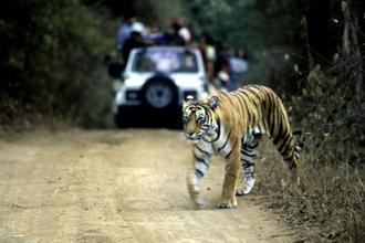 The Red List of threatened species of the International Union for the Conservation of Nature (IUCN) shows that India has at least 974 species that are threatened as of July. Photo: AFP