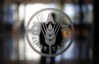 Ironically, FAO warned that despite record global harvest of cereal crops, food security situation will be worsening due to civil conflicts, adverse weather and Ebola outbreak. Photo: Reuters