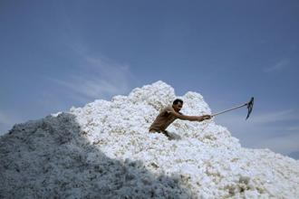 China is importing less cotton, used to make everything from jeans to tee shirts, after inventories in the world's largest user swelled. Photo: Bloomberg