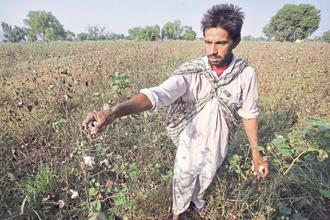 The latest rift between NSAI and MMBL comes on the back of India's antitrust regulator, Competition Commission of India, ordering an investigation last week to find out if MMBL abused its dominant position in the cotton seed market. Photo: Reuters