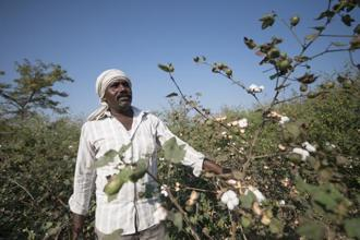 If accepted, the recommendations will benefit nearly 8 million cotton farmers in India, but may raise concerns about how India views its intellectual property rights regime. Photo: Aniruddha Chowdhury/Mint