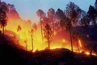 A massive fire in the forests in Kotdwar, Uttarakhand on Monday. Photo: PTI