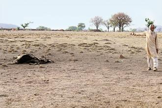 Nand Kishor Naik points to a carcass on the dry lake bed near Balchaur village in Mahoba, Uttar Pradesh. Photos: Ramesh Pathania/Mint