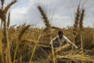 Decline in fertilizer sales and drought conditions over the past 2 years had raised doubt on the optimistic scenario projected by the government on crop sowing. Photo: Bloomberg