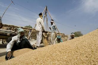 On 8 December, the Centre abolished the 10% import duty on wheat in a bid to tame rising prices. Photo: Mint
