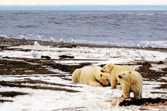 The Arctic was the region showing the sharpest rise in temperatures, while many other areas of the globe, including parts of Africa and Asia, also suffered unusual heat. Photo: Reuters