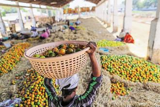 The estimates released by the agriculture ministry shows that during 2016-17 production of fruits rose to 91.7 million tonnes from 90.2 million tonnes in 2015-16. Photo: Bloomberg