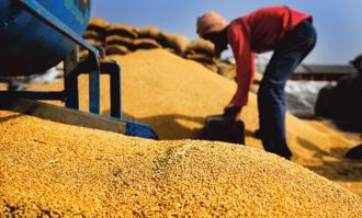 The Centre abolished the 10% import duty on wheat in December last year after retail prices rose due to lower than estimated production in 2016. Photo: Mint