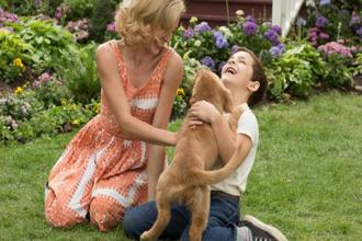 American comedy drama 'A Dog's Purpose' that has netted more than $175 million worldwide released in India last week.