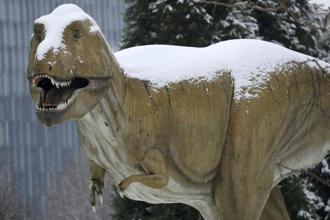 Bite marks on fossilized bones of dinosaurs like the horned Triceratops that lived alongside Tyrannosaurus some 66 million years ago in western North America indicated T. rex was a bone-cruncher. Photo: Reuters