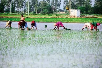 Small landholdings and uncertain monsoon rain make India one of the world's most expensive places to farm. Photo: Pradeep Gaur/Mint