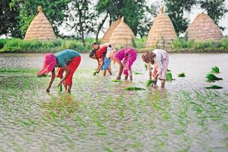 When farmers plant crops, they do not know what the market price of the produce will be. Photo: Pradeep Gaur/Mint