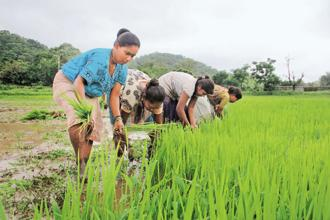 Banks cite poor recovery of past debts, farm loan waiver as reasons for low levels of credit disbursement . Photo: HT