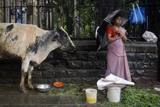 But a 2012 livestock census found there were more than five million stray cattle across India and more than 12,000 in Delhi. Photo: Reuters