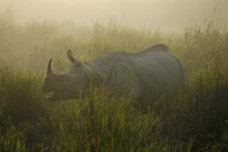 The National Green Tribunal (NGT) has expressed concern over animal deaths in road accidents near the Kaziranga National Park, which is home to the rhinoceros and elephants. Photo: AP