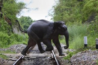 Swift action is required to protect wildlife habitats before the elephant literally winds up in the room. Photo: AP