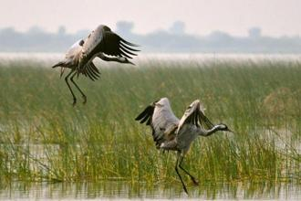 Cranes in the Little Rann of Kutch. Photographs by Lakshmi Sharath