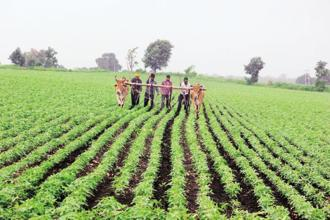 The scheme has been structured in such a way that states will be incentivized to link farmers to the market and also produce more value-added crops. Photo: HT