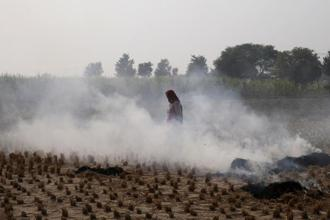 A large number of farmers particularly in Punjab and Haryana are burning the farm stubble/straw, which causes air pollution, in the absence of viable alternatives. Photo: AP