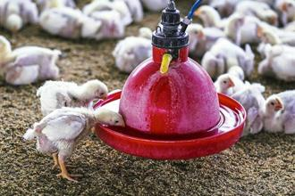 Maximum permissible limits of 37 antibiotics and 67 other veterinary drugs are prescribed for chicken, the health ministry said in a statement. Photo: Mint